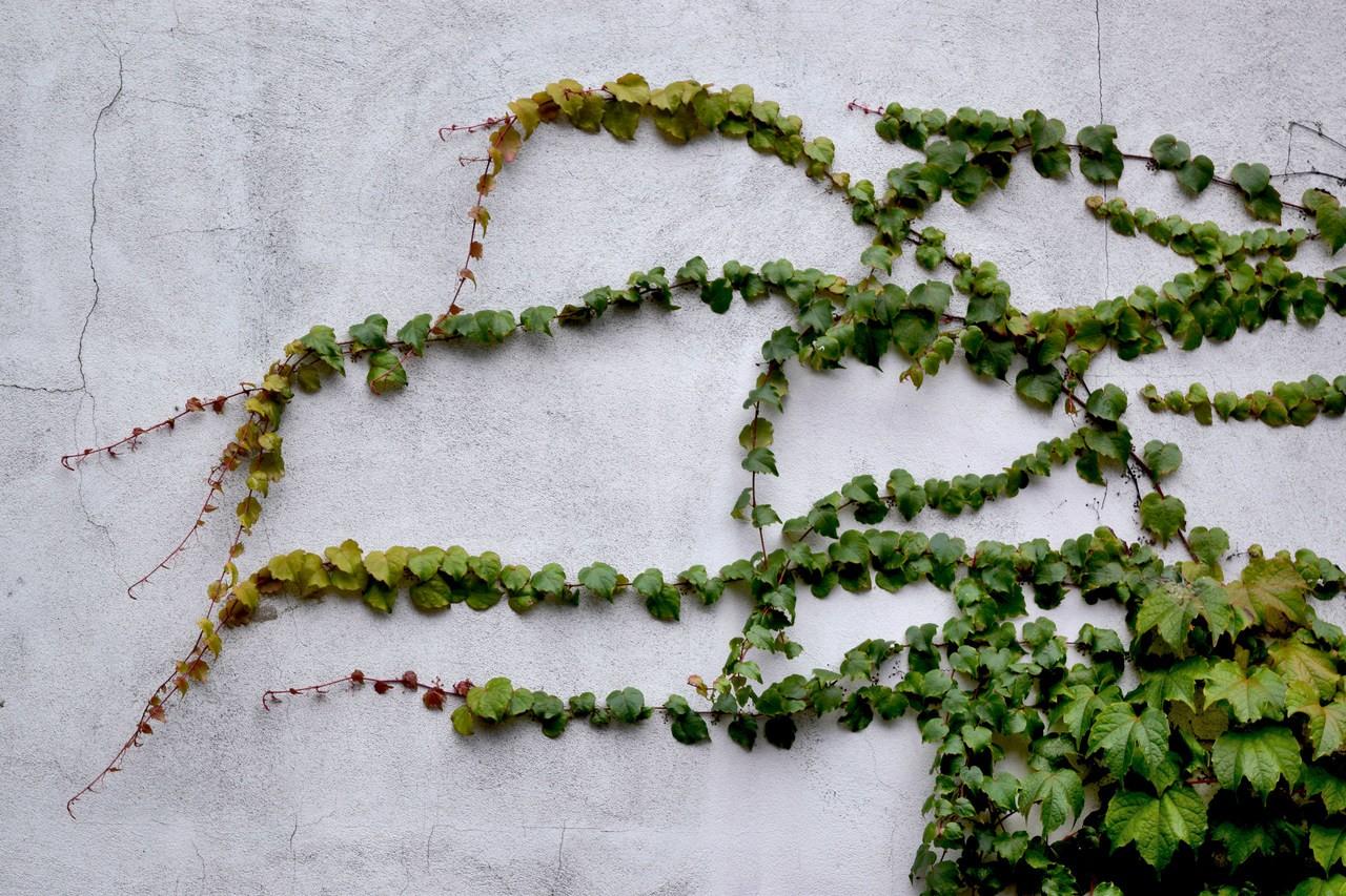 zielone ściany poznań