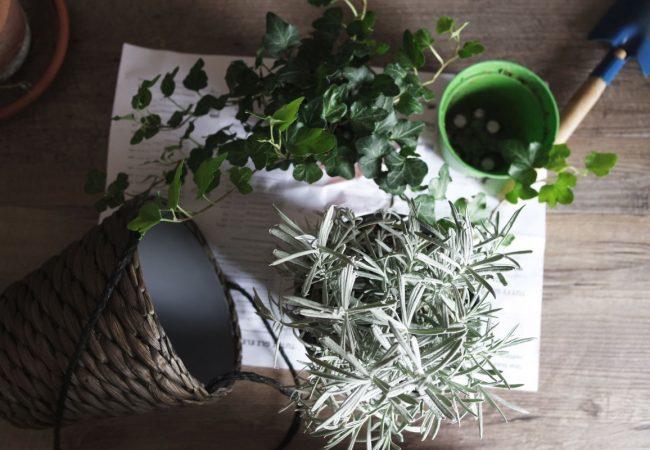 zieleń we wnętrzu pzonań