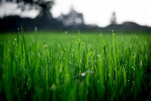 Pięlęgnacja i nawadnianie ogrodów